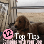 Taking your dog camping? Here are the 12 Top Tips for Camping with your dog - What Worked for us! #Campingwithmydog #TipsforCampingwithdog #DogCamping #CampingTips #camping #CanineCamping #CampingTopTips #CampingDog