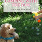 Goldendoodle puppy in grass with boy and bubbles