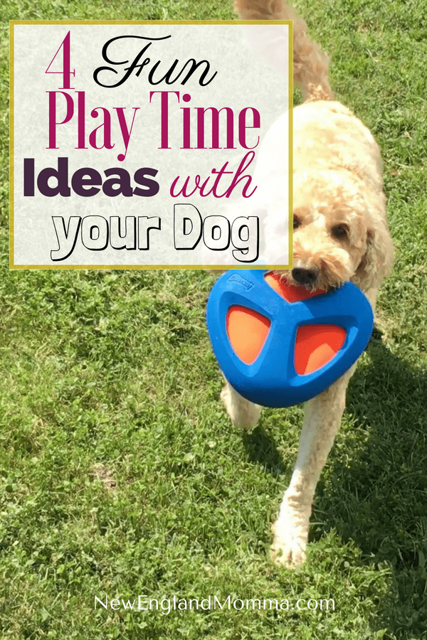 # Sponsored - Dogs love to play. Like kids, they crave attention. Playing fetch is a great way to exercise your dog and strengthen your bond with your dog.