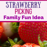 Strawberry picking season is almost upon us! June you can find ripe, juicy red strawberries. Add this fun activity to your summer bucket list! #Strawberries #Strawberry #PYO #PYOTips #StrawberryPicking #DayTrip #Funtodo #FamilyFun #NewEngland #SummerBucketList