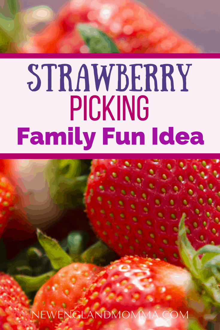 June in Massachusetts means it's time to pick the holder it is time to pick strawberries! Check out these strawberry picking tips before you go! #Strawberries #Strawberry #PYO #PYOTips #StrawberryPicking #DayTrip #Funtodo #FamilyFun #NewEngland