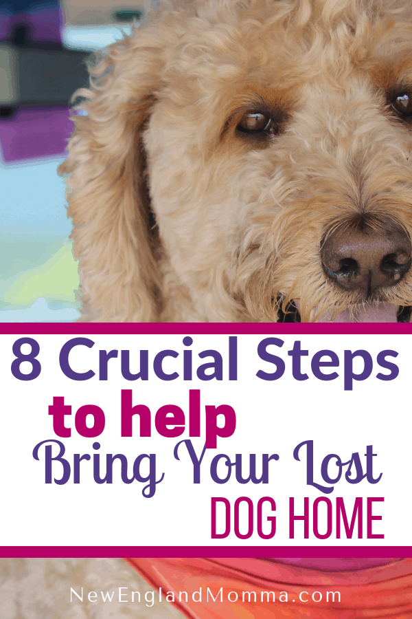 Dogs get lost often. Know the 8 crucial steps you need to do to increase the chances of bringing your lost pet home. #LostDog #LostPet #FindMyDog