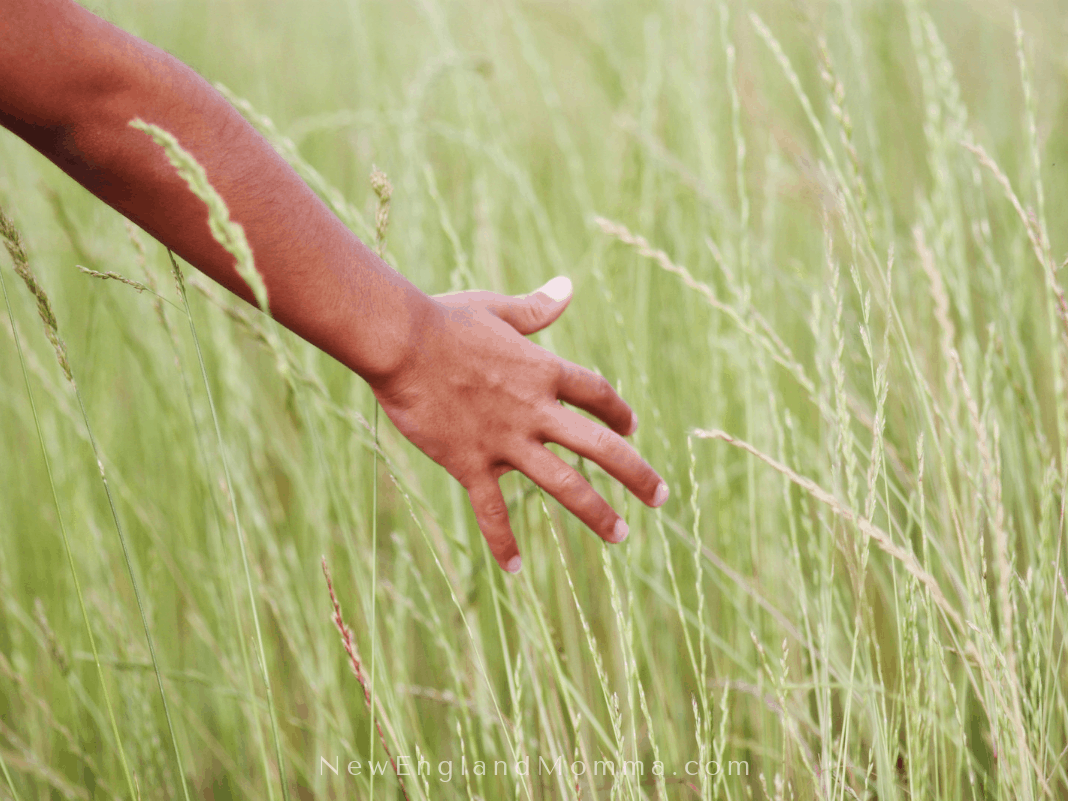 one hand brushing tall grass outdoors