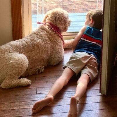 4 Fun Ways to Play with your Dog