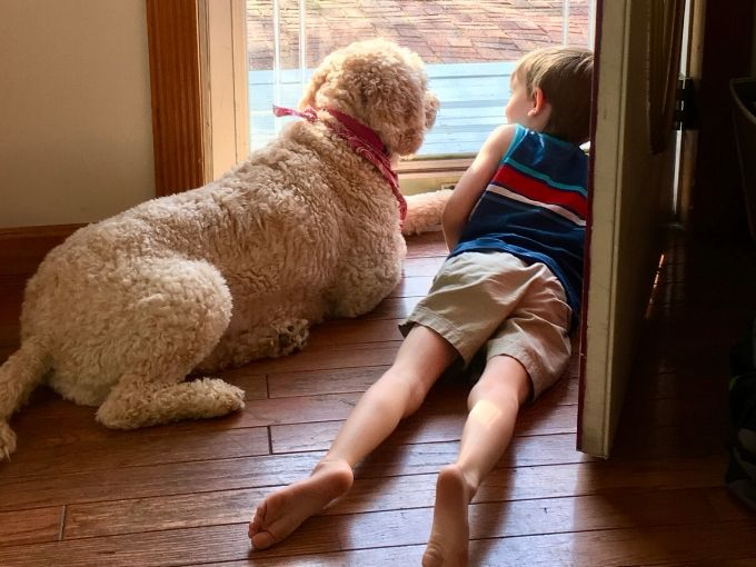 goldendoodle with little boy both laying down and looking out front door