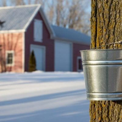 silver bucket on maple tree with red barn and snow on the ground