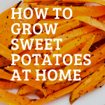 sweet potatoes cut up like fries for roasting