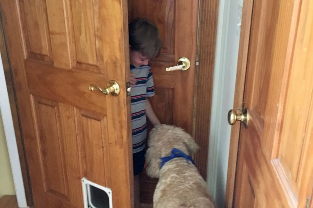 A boy hiding behind a wooden door and a Goldendoodle dog finding him.