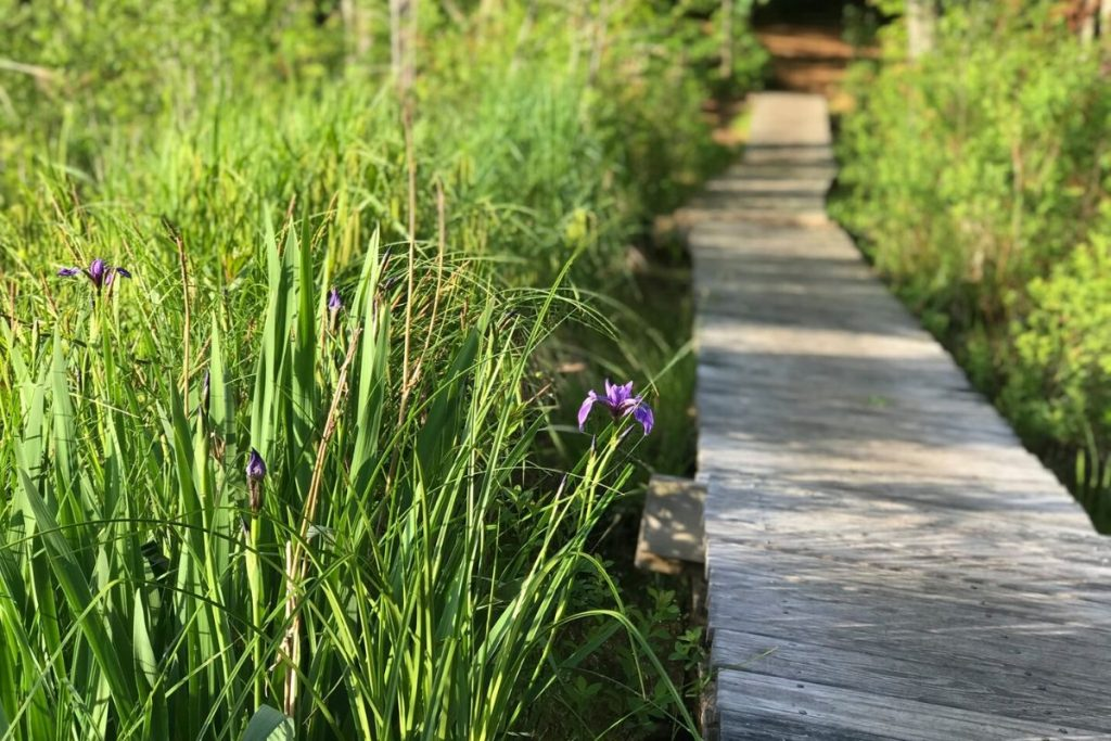 wooden boards create a path through tall grass and wildflowers