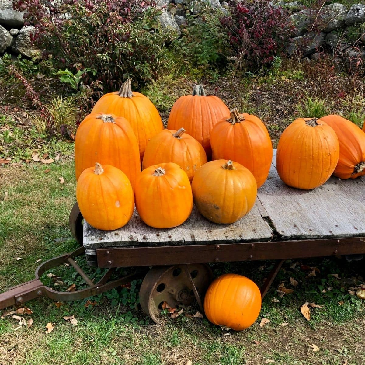 an old wooden cart with big orange pumpkins on it